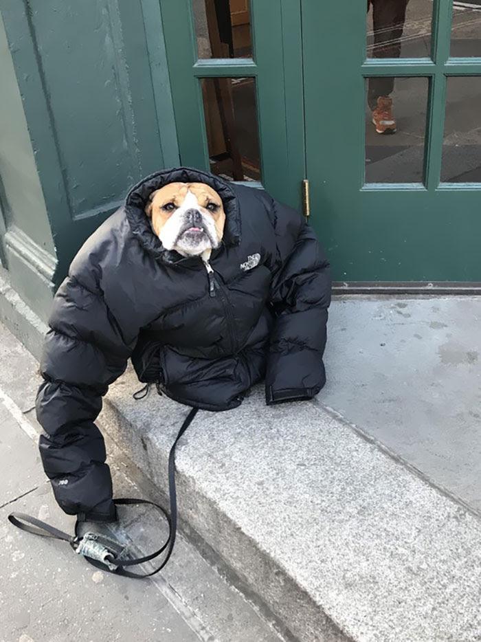 Hacía tanto frío que le puse mi abrigo al perro