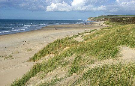 Dunes et oyats, cap Blanc-Nez, Côte dOpale, Nord-Pas-de-Calais.Dunes and marram grass.