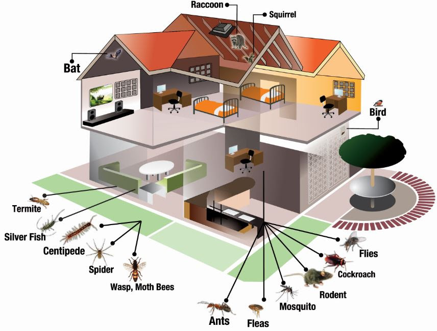 Pest Inspection and Control | Online pest removal guide