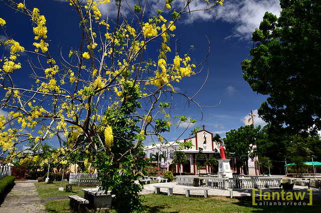Alabat Summer Bloom