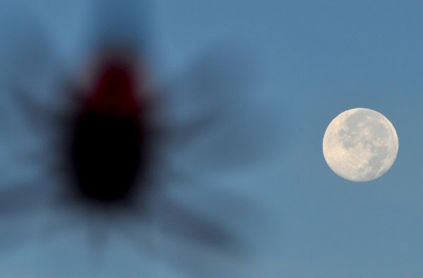 Beautiful Moon, Obnoxious Spider