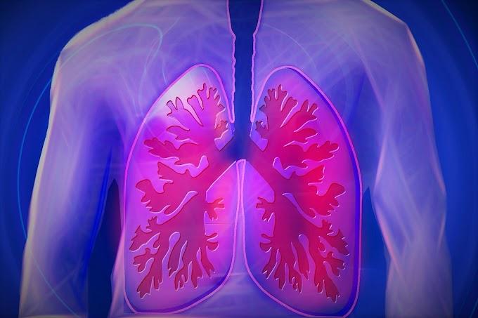 Fisiologia | Sistema Respiratório
