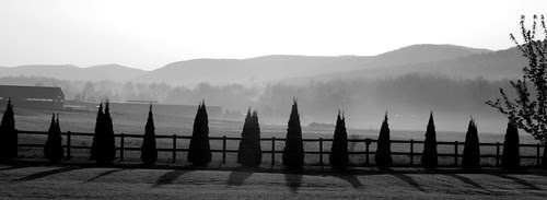 A black and white morning