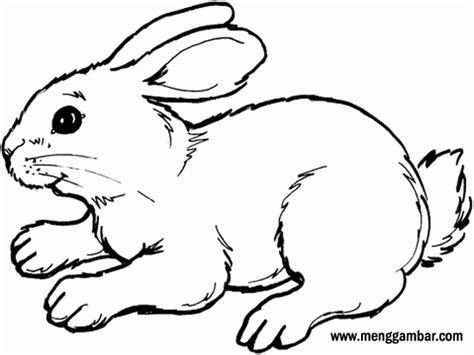 menggambar  mewarnai kelinci menggambarcom