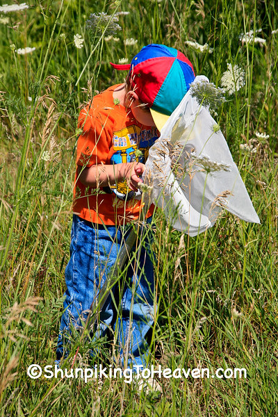 Collecting Butterflies, Rock County, Wisconsin