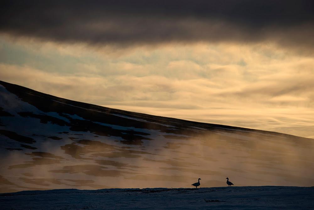 Wrangel-island_07863