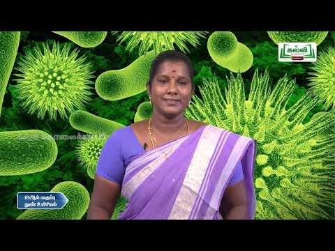 11th Micro Biology மருத்துவ பாக்டிரியாலஜி இயல் 5 Kalvi TV