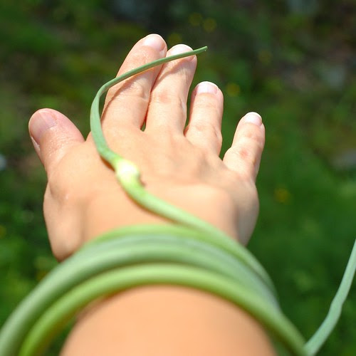 Garlic scapes as bracelet by Eve Fox, Garden of Eating blog, copyright 2012