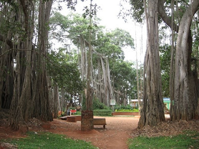 Big Banyan Tree, Ramohalli, Bangalore