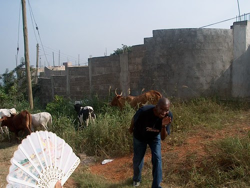 Tomfoolery a la goat
