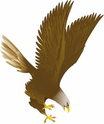 470 Gambar Burung Rajawali Vector HD