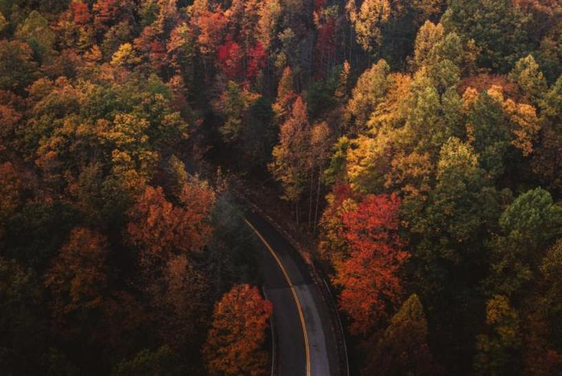 Aerial View of a road in a forest
