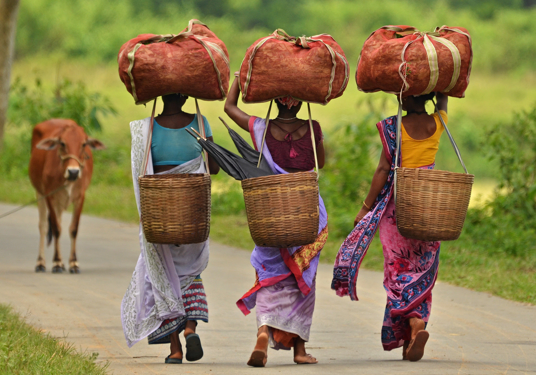 Workers carry sacks of tea leaves at a tea estate in Nagaon district in the northeastern state of Assam, India