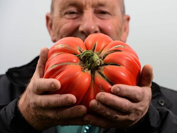Joe Atherton, de Mansfield, ganhou o primeiro lugar com seu tomate gigante, que pesava 2,06 quilos (Foto: Nigel Roddis/Reuters)