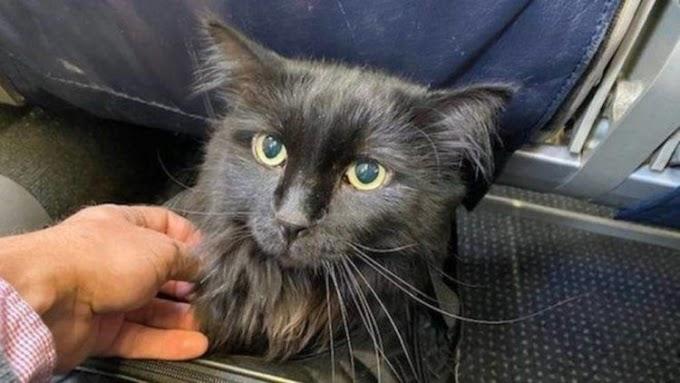 Un gatito se reencuentra con su dueño después de 5 años y 2.000 kilómetros lejos de su hogar