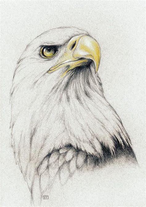 bald eagle drawing pinteres