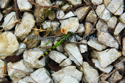 a green dragonfly on the rocks