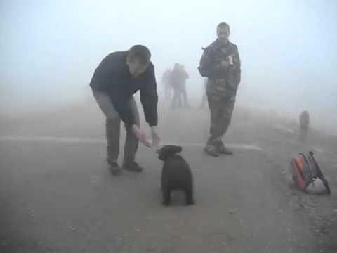 VIDEO: Αυτή την επίθεση αρκούδας όλοι θα ήθελαν να την ζήσουν!