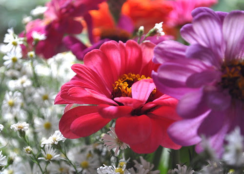 zinnias and easter daisies