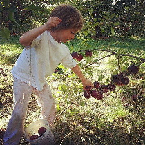 "Picking apples ""for Dad to have in his lunch!"""