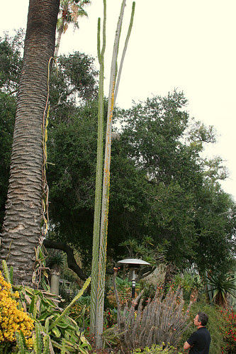 huntington tall succulents