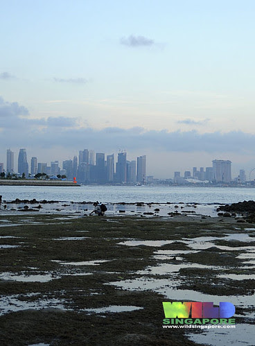 Living lagoon of Kusu Island with city skyline
