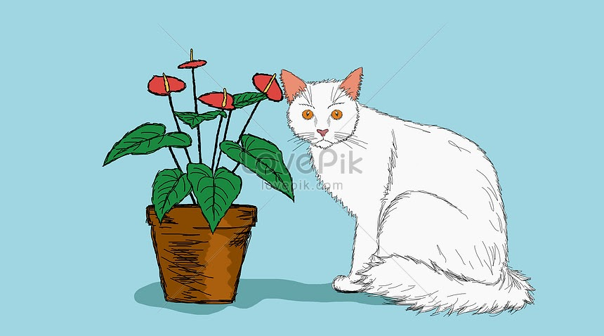 Gambar Kucing Yang Mudah Ditiru godean.web.id