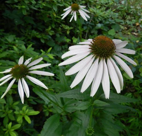 todayflowersDSCN8809
