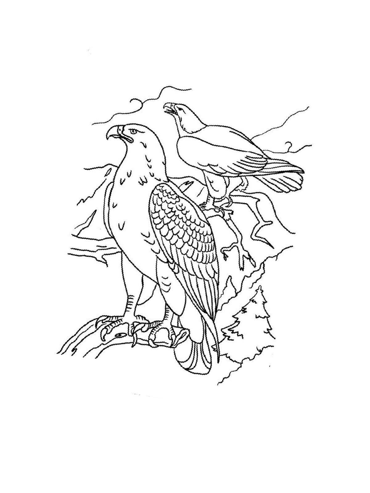Beim Ausmalen können Kinder eigene Gefühle ausdrücken Hier können Sie Ausmalbilder von Adler kostenlos ausdrucken Malvorlagen für Kinder