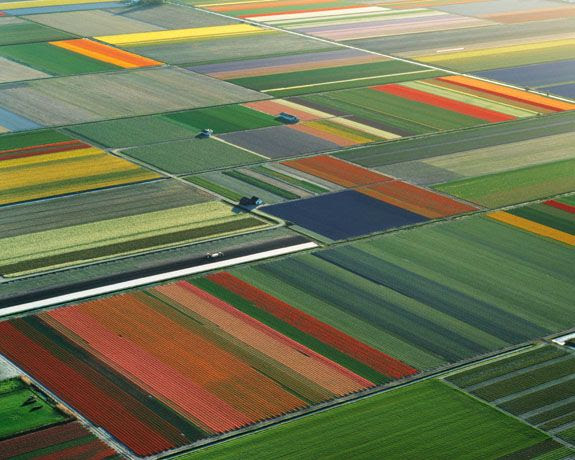 This is what the flowerfields in Holland look like in spring, it amazes me every year