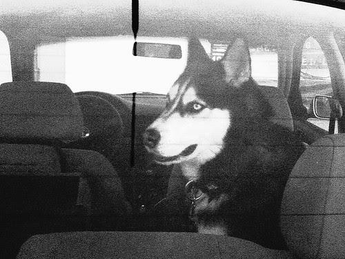 022/365 • canine car