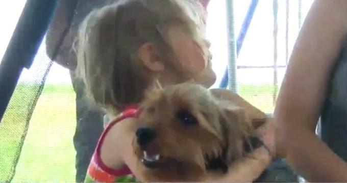 Una niña de 3 años sobrevive gracias a su leal perro después de desaparecer durante 12 horas