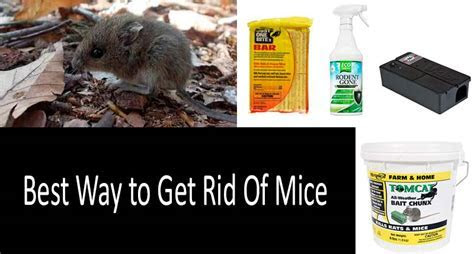 ? Best Way to Get Rid of Mice: the best mouse killers and traps
