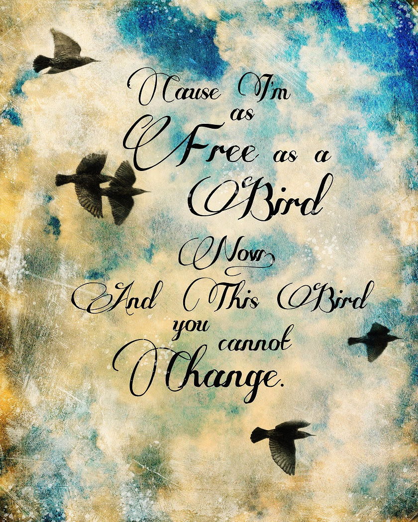 Quotes About Bird 559 Quotes