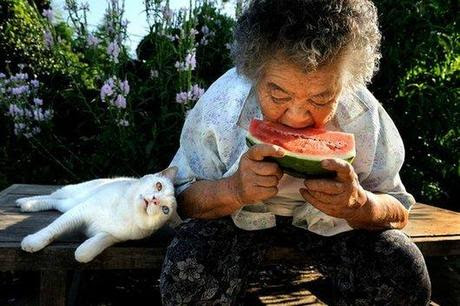 cute, sweet, cool, cat, funny cats, best friends, pets, Heartwarming: Old Lady Misa and Her Cat Best Friend Fukumaru