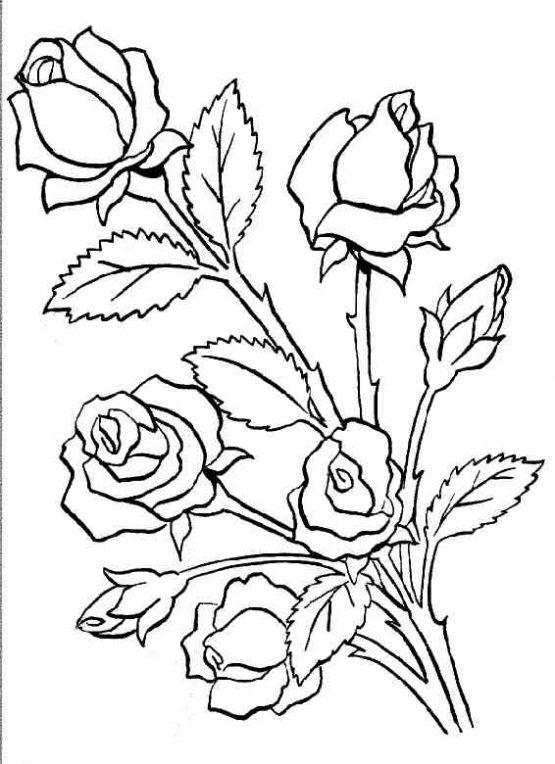 Dibujo De Ramos De Rosas Para Colorear Dibujos Infantiles De Ramos