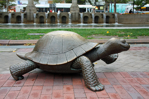 Be The Tortoise Slow Steady Always Wins Out In Fitness The Art