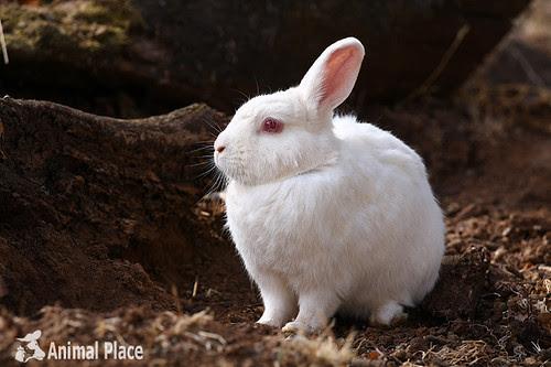 Holly rabbit