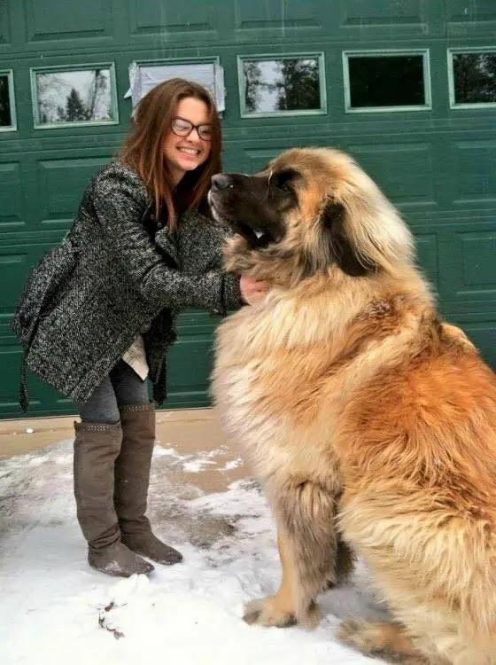 leonberg le plus gros du monde chien