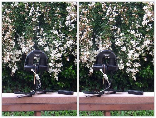 DSCF5185 PENTAXステレオアダプター逆付けマクロ撮影テスト (parallel 3D)