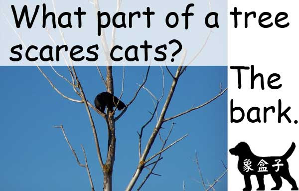 cats tree bark 貓 樹 樹皮 狗 吠叫