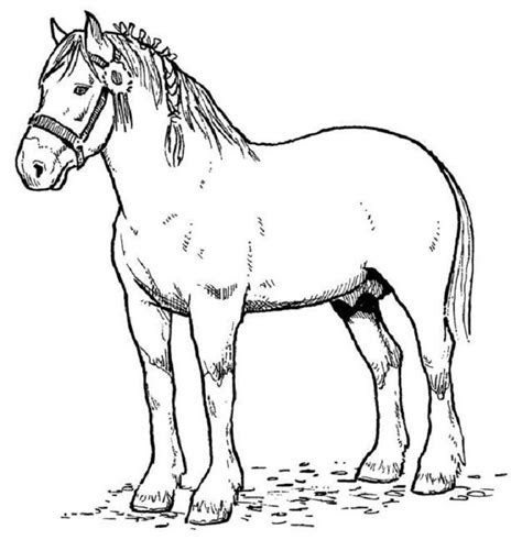 printable horse coloring pages  kids  printable