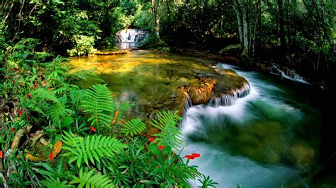 tropical rainforest jungle cascade waterfall transparent
