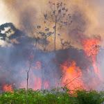Amazonie : 72 843 départs de feu enregistrés depuis le début de l'année - Daily Geek Show