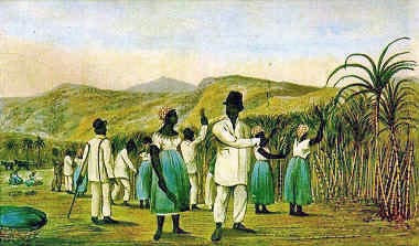 Slaves cutting Sugar Cane