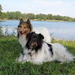 Reilly and Denny - The Cowspotdogs
