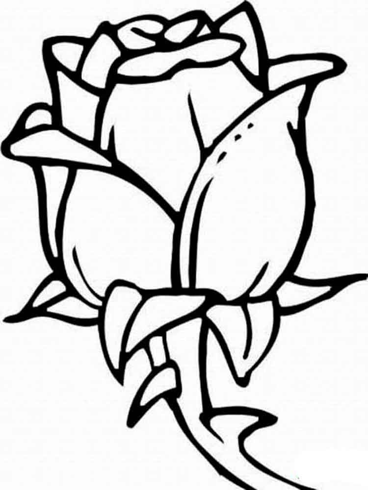 rose flower coloring pages 3
