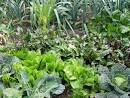 What Are The Benefits Of Having A Backyard Organic Garden | ifood.