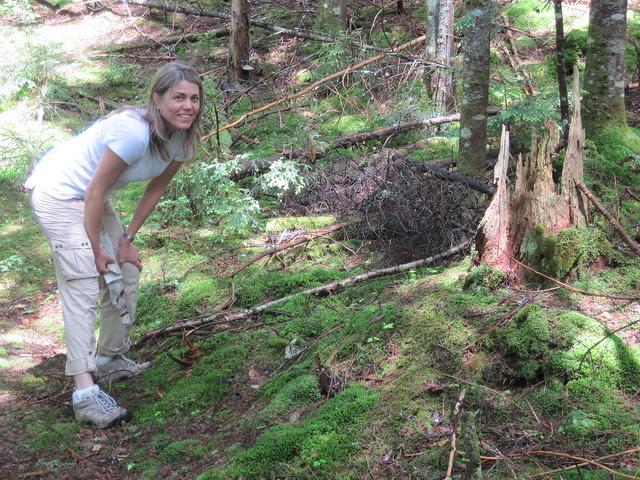 Loving the stumps!