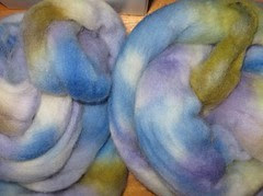wooly daisy blue